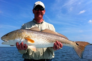 browne redfish